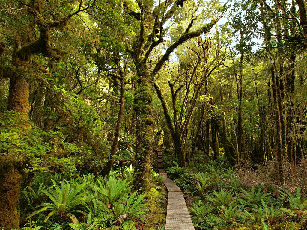 Hump Ridge Track ~ Board Walk through the Trees