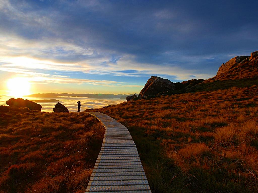 Hump Ridge Track ~ For One